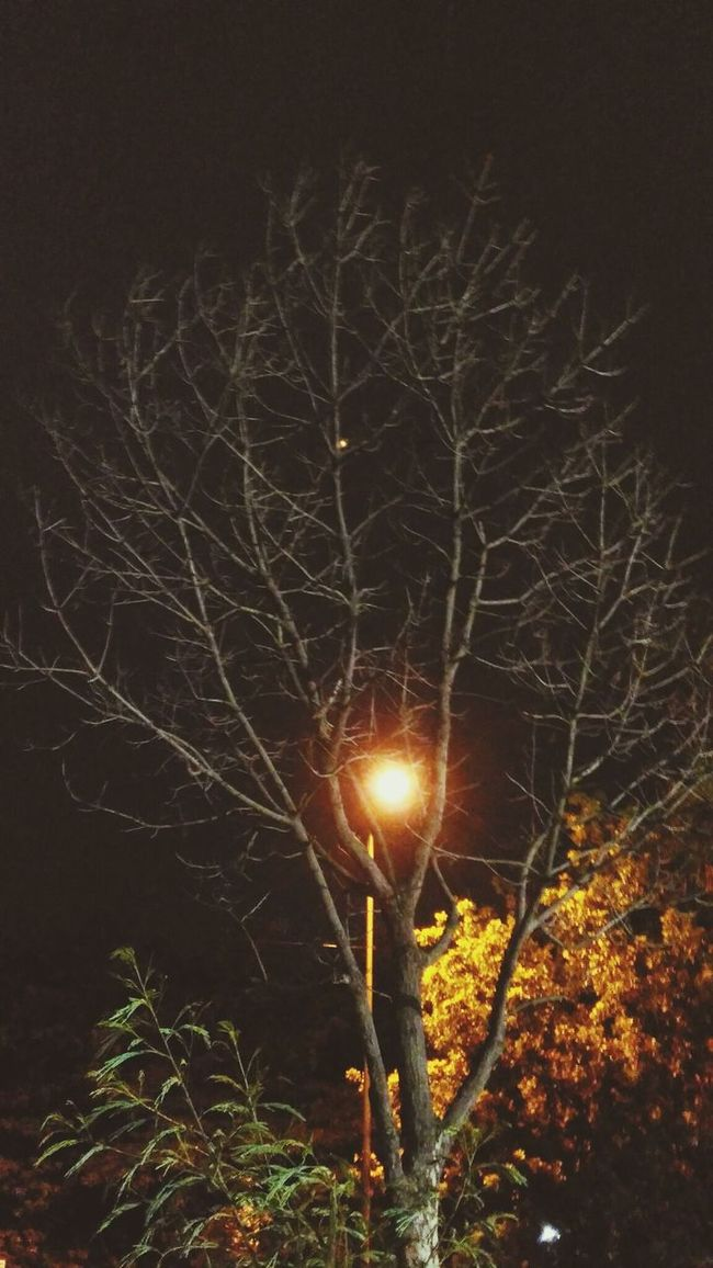 Mobile Photography Enjoying Life Having Fun :) Taking Photos ❤ Nature Love Nature Photography Nature Photography Art Is Everywhere LoveNature Leafless Tree In Night The Trees Night Photography Mansoon Raining Day Fantastic Weather! Cold Great Atmosphere