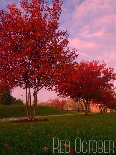Fall Colors Red October