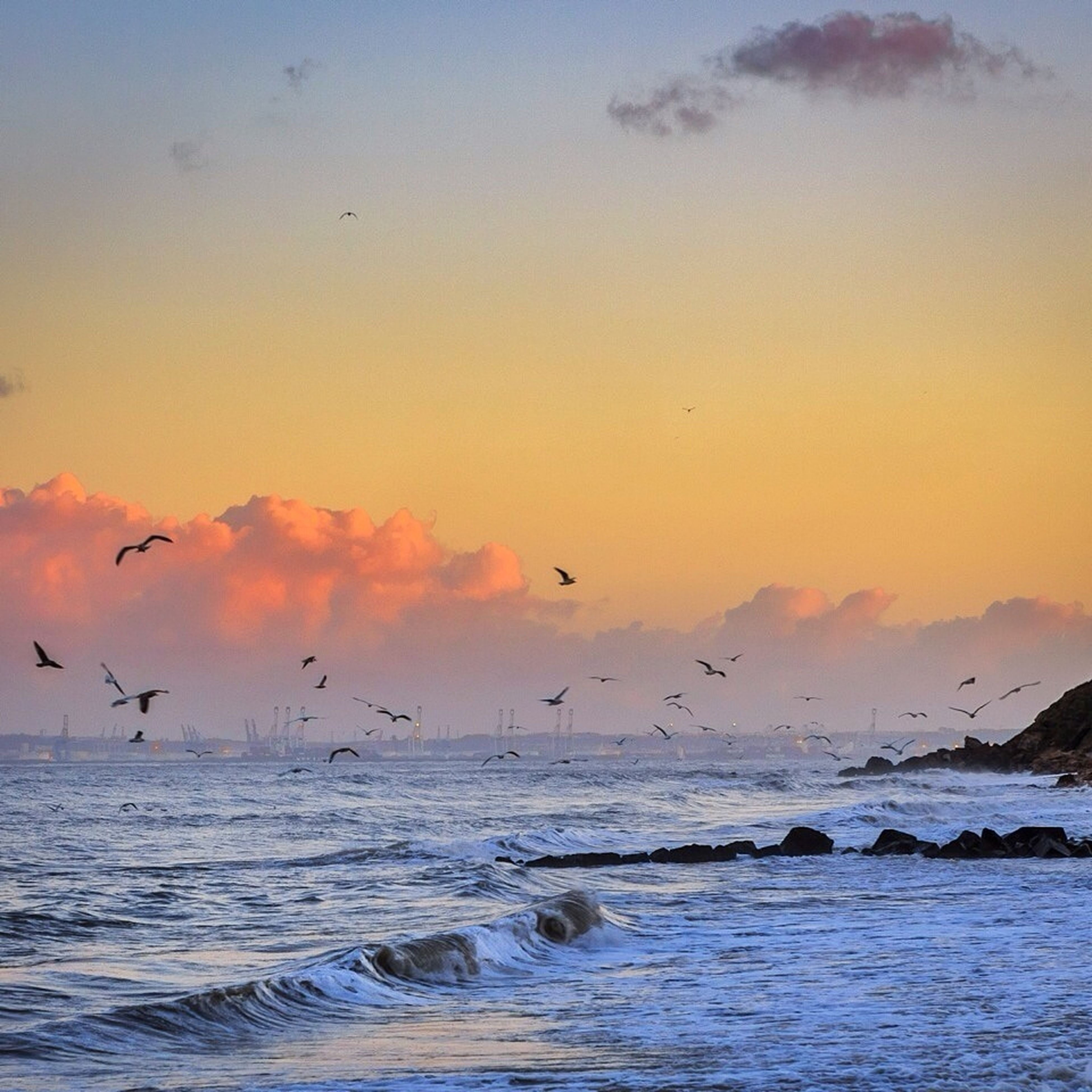 bird, sea, water, animal themes, animals in the wild, flying, wildlife, sunset, horizon over water, sky, scenics, beauty in nature, tranquil scene, nature, waterfront, tranquility, idyllic, one animal, wave, cloud - sky