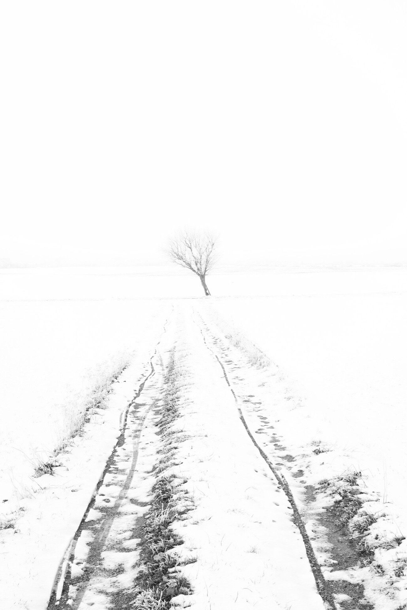 Snow Winter Landscape Outdoors Monochrome Shootermag EyeEm Best Shots - Black + White Black And White Bw_collection Tree