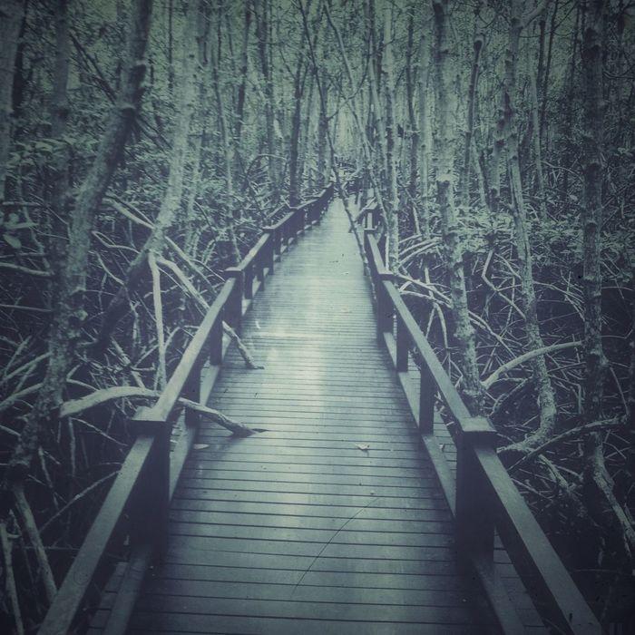 TreePorn Retrolux AMPt_community Nature_collection