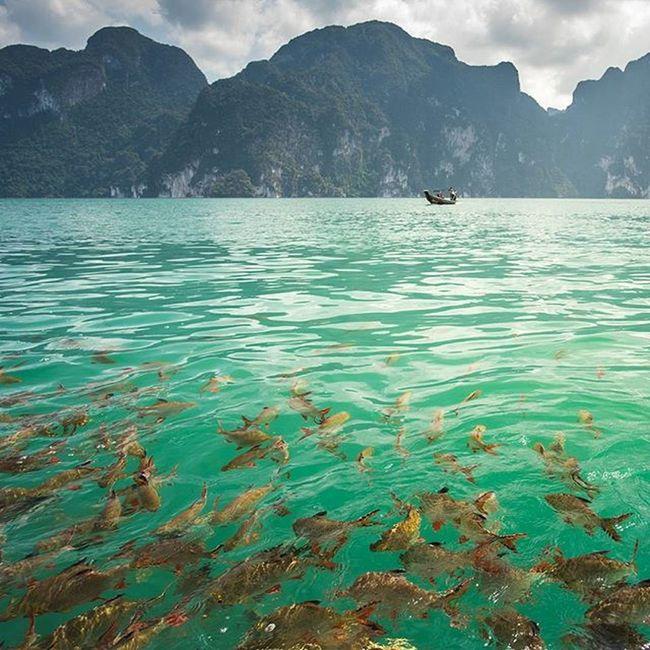 ปลาตะเพียนริมเขื่อน Lumixgx8 Suratthani Thailand Thaitraveling Amazingthailand Unseenthailand Worldmastershotz_asia Outdoorresearch Reviewthailand Everydayclimatechange