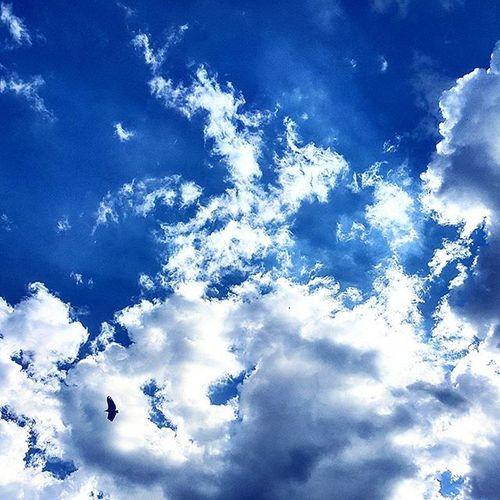Fly like... Fly Voando Urublues Urublue Nuvens Smartphonephotography Cellphonephotography Photo Nature