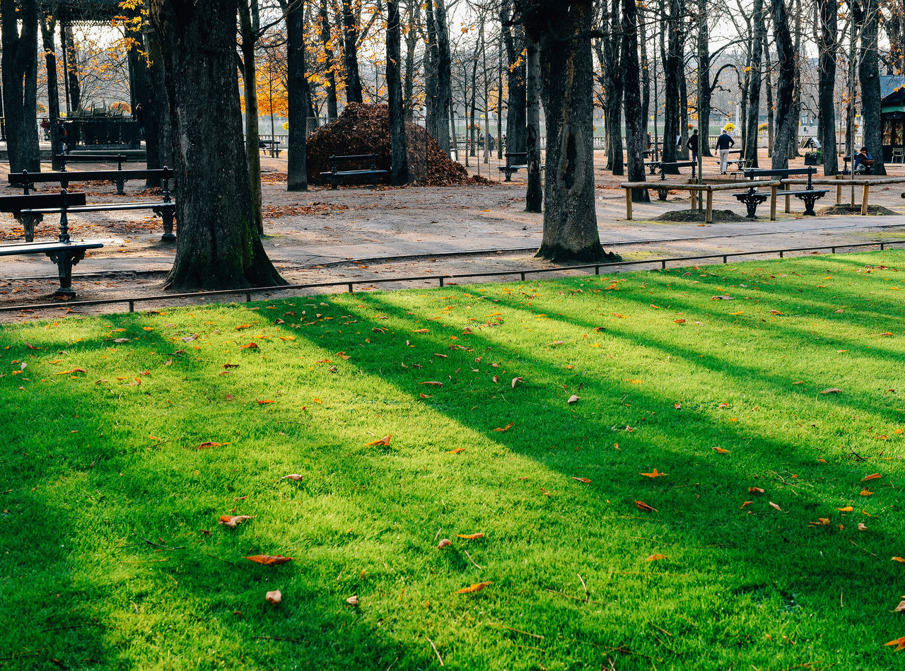 Jardin du Luxembourg, autumn in Paris Autumn Beauty In Nature Day Film Photography Grass Green Color Growth Jardin Du Luxembourg Nature No People Outdoors Paris Park Shadow Strolling Sunlight Sunset Tree Tree Silhouette Tree Trunk Walk