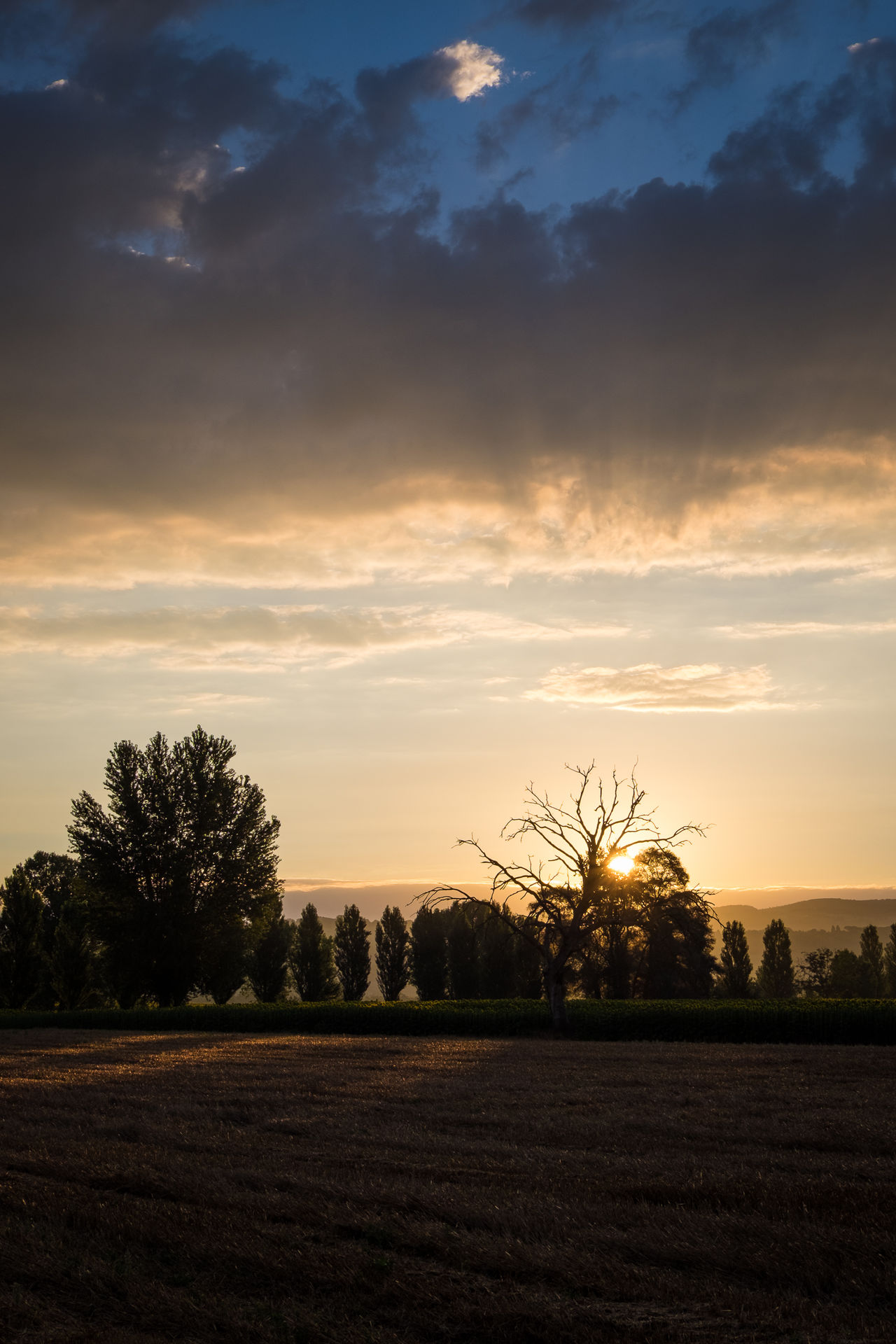 Beauty In Nature Cloud - Sky Field Idyllic Italy Landscape No People Non Urban Scene Outdoors Perugia Perugia Italy Sky Sunrise Sunrise And Clouds Todi  Tranquil Scene Tree