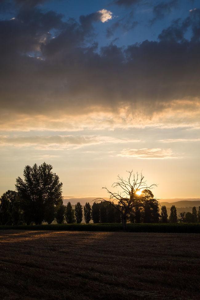 Beauty In Nature Cloud - Sky Field Idyllic Italy Landscape No People Non Urban Scene Outdoors Perugia Perugia Italy Sky Sunrise Sunrise And Clouds Todi  Tranquil Scene Tree