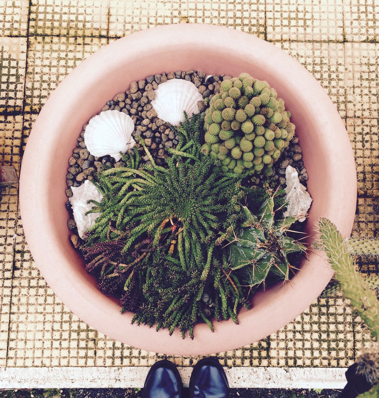 Beautiful stock photos of augen,  Backgrounds,  Botany,  Cactus,  Day