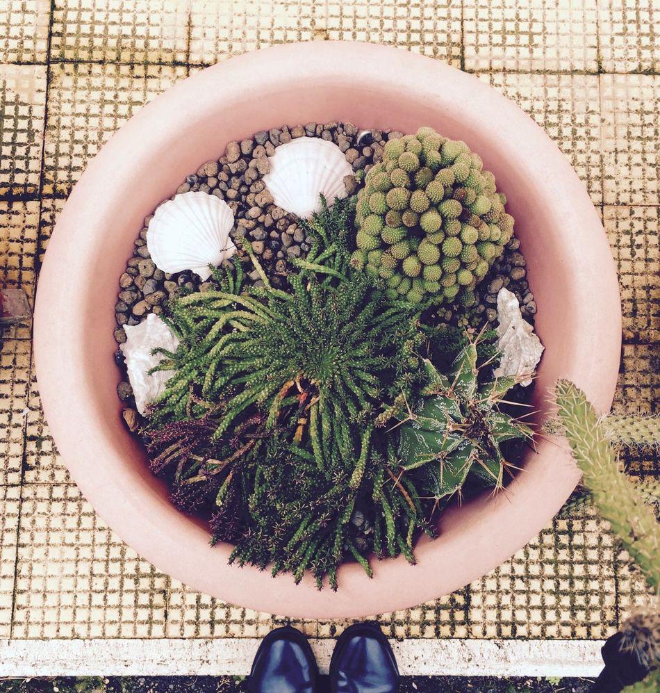 Beautiful stock photos of blumen,  Backgrounds,  Botany,  Cactus,  Day