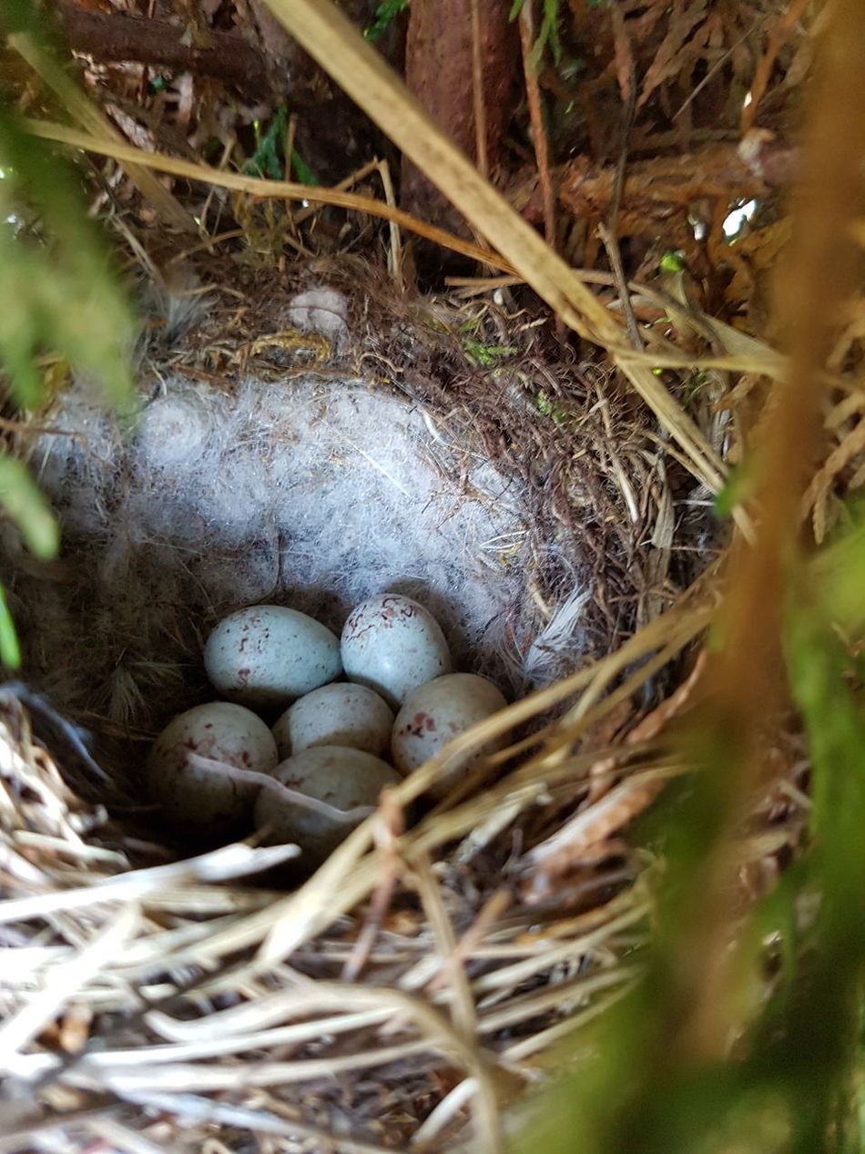 Animal Nest Bird Nest Close-up Outdoors No People Nature Animal Themes High Angle View Fragility Egg Eggs Bird Egg Bird Eggs Nest Nature Birds Bird