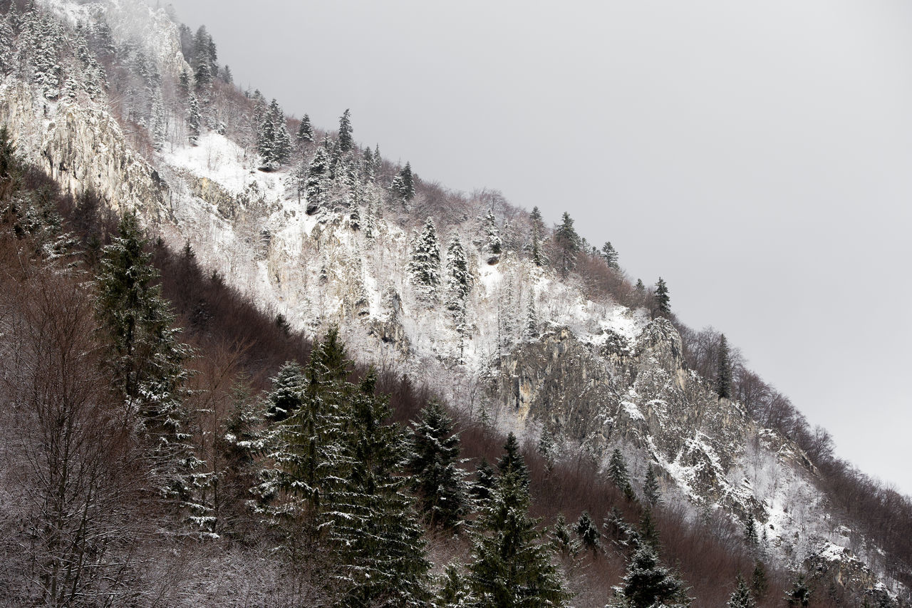 Beauty In Nature Cold Temperature Coniferous Tree Day Evergreen Tree Fir Tree Fog Foggy Forest Landscape Mist Mountain Nature Nature No People Outdoors Pine Tree Pine Wood Pine Woodland Rock Scenics Snow Snowing Tree Winter