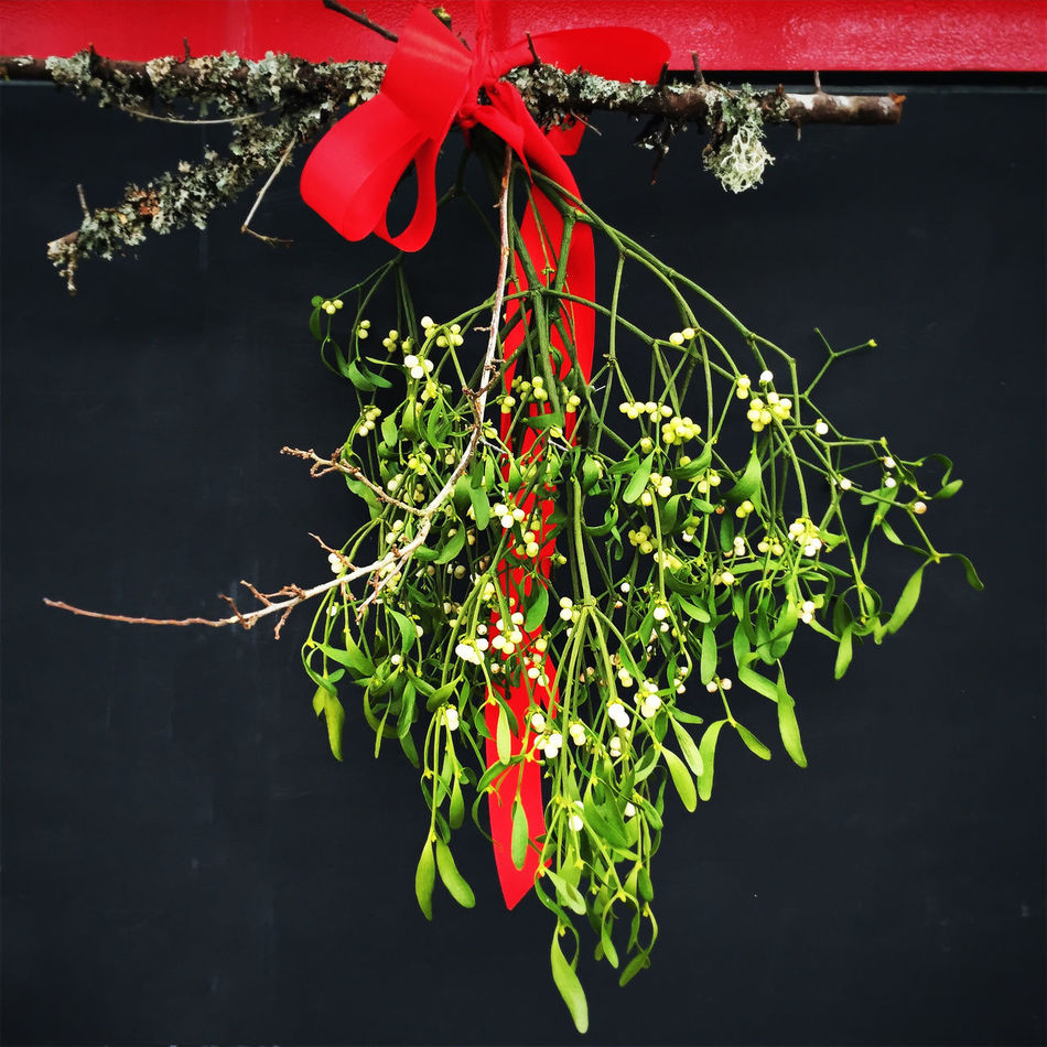Mistletoe Christmastime Xmas Branch Green Red Ribbon Door Kiss Tradition Love Home Family Decorative Decoration Health Greetings Congratulations Advent Romantic Romance Sylvester Happy New Year