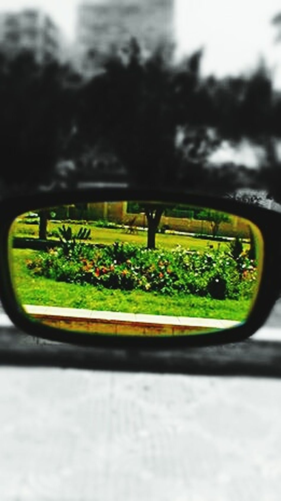 Glasses Glasses Or No Glasses? Glasses Reflect Transportation Car Reflection Land Vehicle Green Color Mode Of Transport Road Vehicle Mirror Tree No People Close-up Day Nature Side-view Mirror Freshness Outdoors