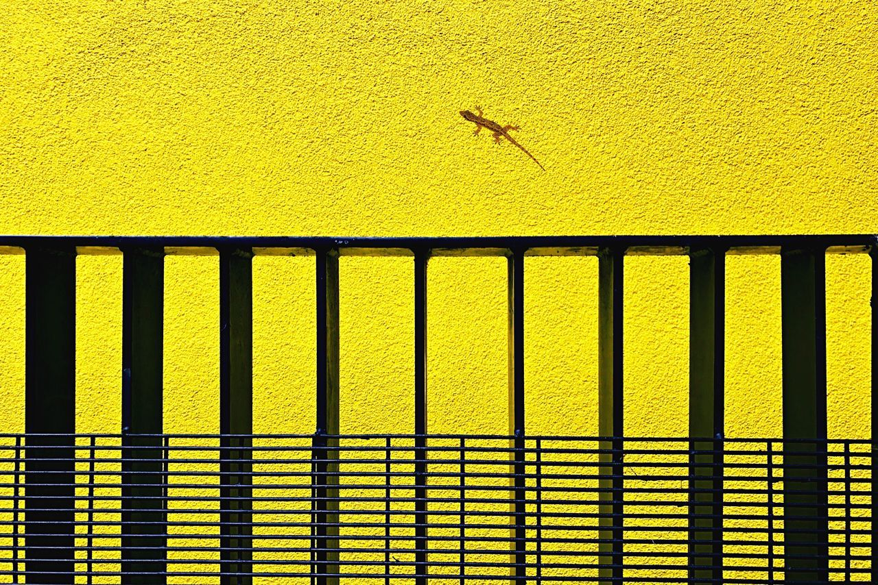 Yellow No People Outdoors Textured  Nature Yellow Color Minimalism Minimalist Lizard Textures And Surfaces Texture Wall Yellow Wall Architecture Summer Summer Colours Colours EyeEmBestPics EyeEm Best Shots From My Point Of View Quiet Places Building Exterior Built Structure One Animal Reptile