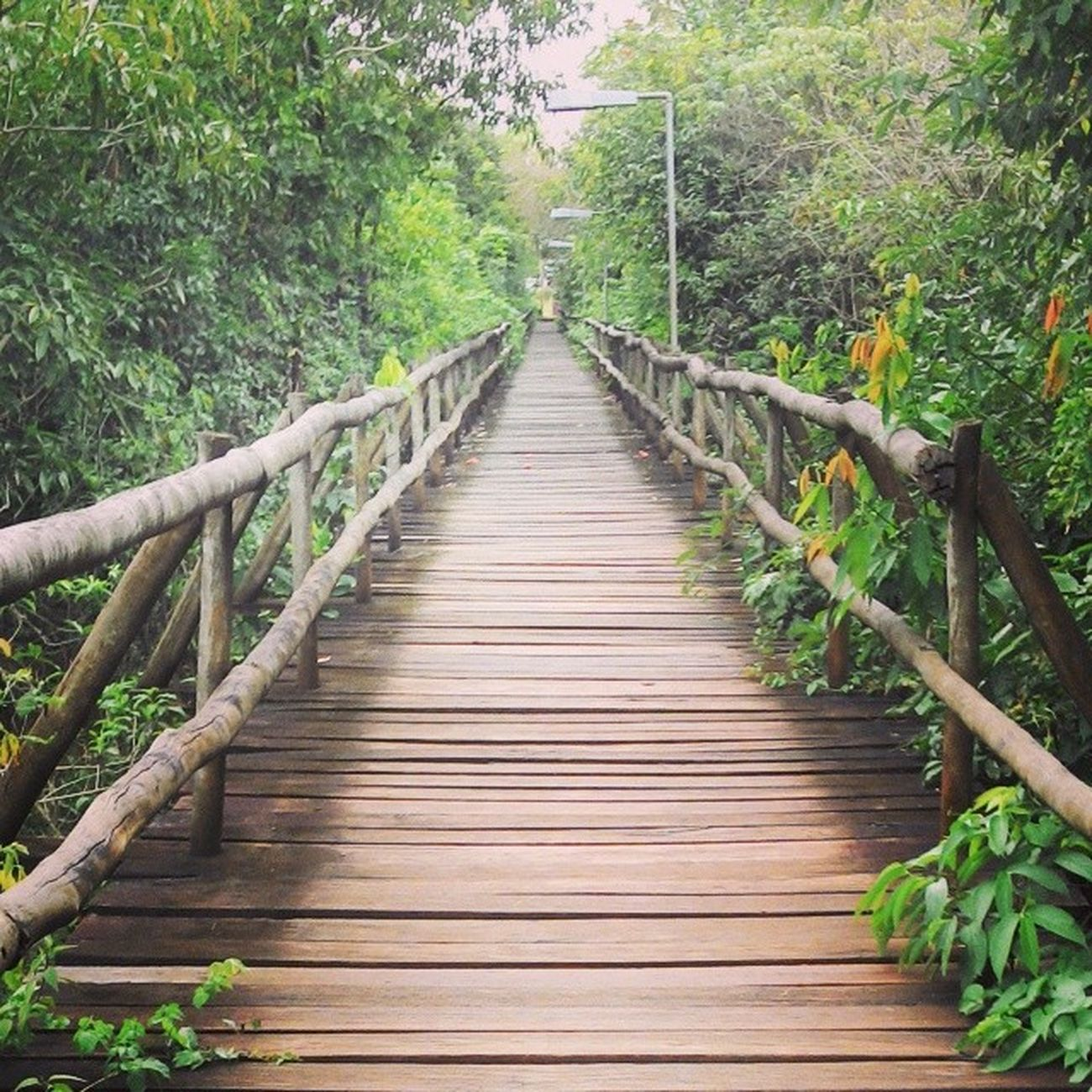 Ponte sobre o lago do amor Ufms Conected With Nature