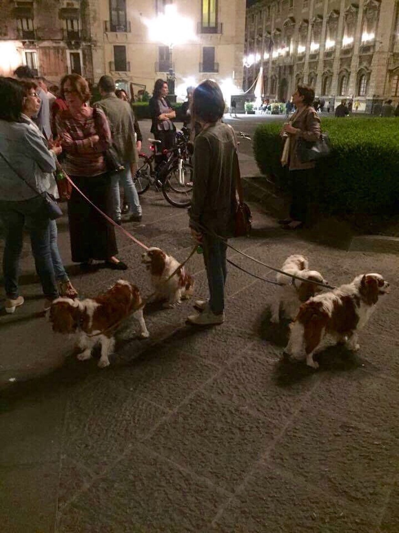 Domestic Animals Pets Outdoors Adults Only Bunch Of Dogs Cavalier King Charles Spaniel No Filters Or Effects Eyemstreetphoto Nightphotography Night Lights Nightshot The Street Photographer - 2017 EyeEm Awards Real People Mycity Catania, Sicily