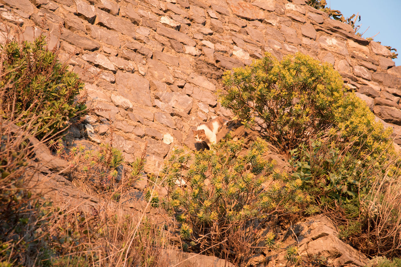 rock - object, rock formation, nature, no people, outdoors, plant, growth, day, scenics, mountain, tree, beauty in nature, animal themes