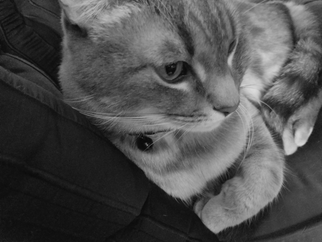 My Topo Monochrome Photography One Animal Pets Animal Themes Domestic Animals Domestic Cat Cat Feline Whisker Close-up Looking Away Mammal Animal Head  Relaxation Zoology Animal Alertness Curiosity Selective Focus At Home Whiskers MUR B&W
