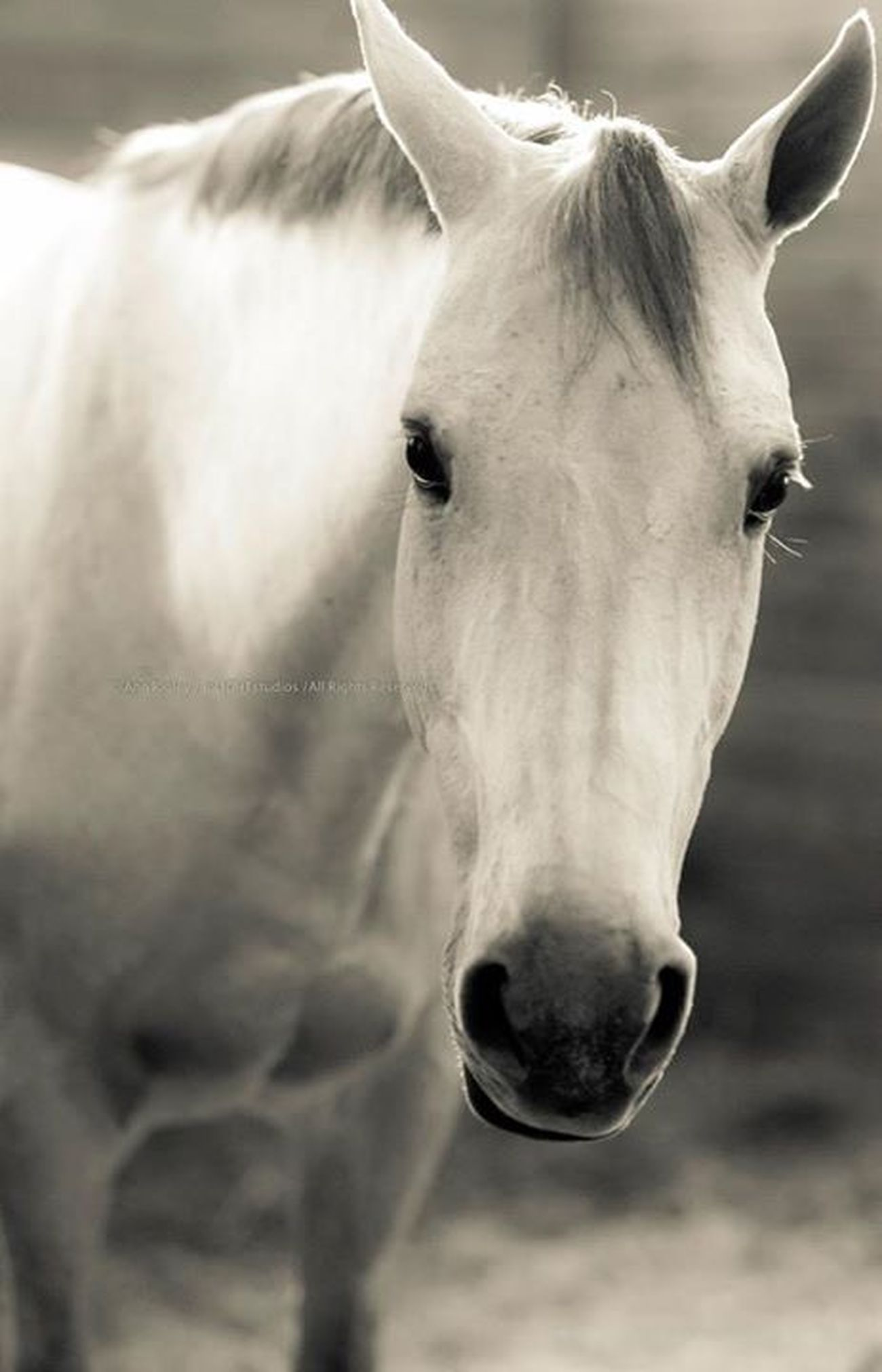"©Ann Norsworthy-Rigley direct """" Horses Natural Light IoLIGHTstudios  Horse"