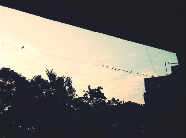 Birds EyeEm Birds Birdporn Sky And Clouds maybe he is not alone