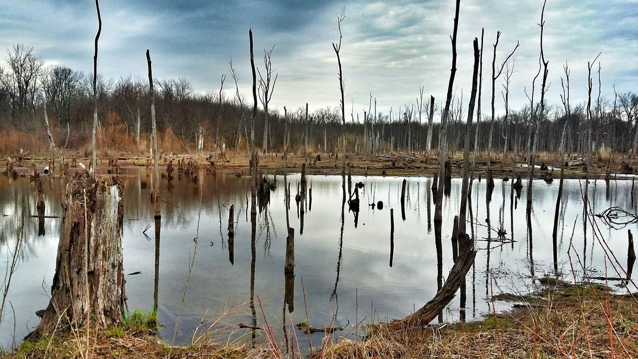 Check This Out Enjoying Life EyeEm Outdoors Trees And Water EyeEm Nature Lover Swamp Dead Lands
