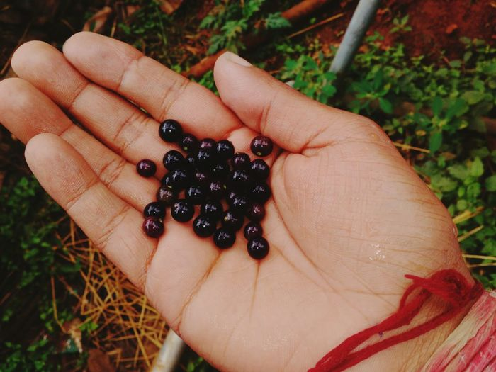 Edible Berry Naturally Grown Sweet Healthy Eating Human Hand One Person Fruit Freshness Outdoors Holding Mobilephotography EyeEm Best Shots Close-up Click Click 📷📷📷 EyeEm Nature Lover Nature_collection EyeEm Gallery 😍😍😍😍😍😍😍😍😍😍😍😍😍