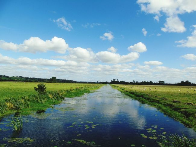 Diminishing Perspective Tranquil Scene Water Tranquility Grass Sky Field Landscape Beauty In Nature Idyllic Nature Riverbank Rural Scene Non-urban Scene Cloud - Sky Nature On Your Doorstep Somerset Levels Uk In All Its Glory