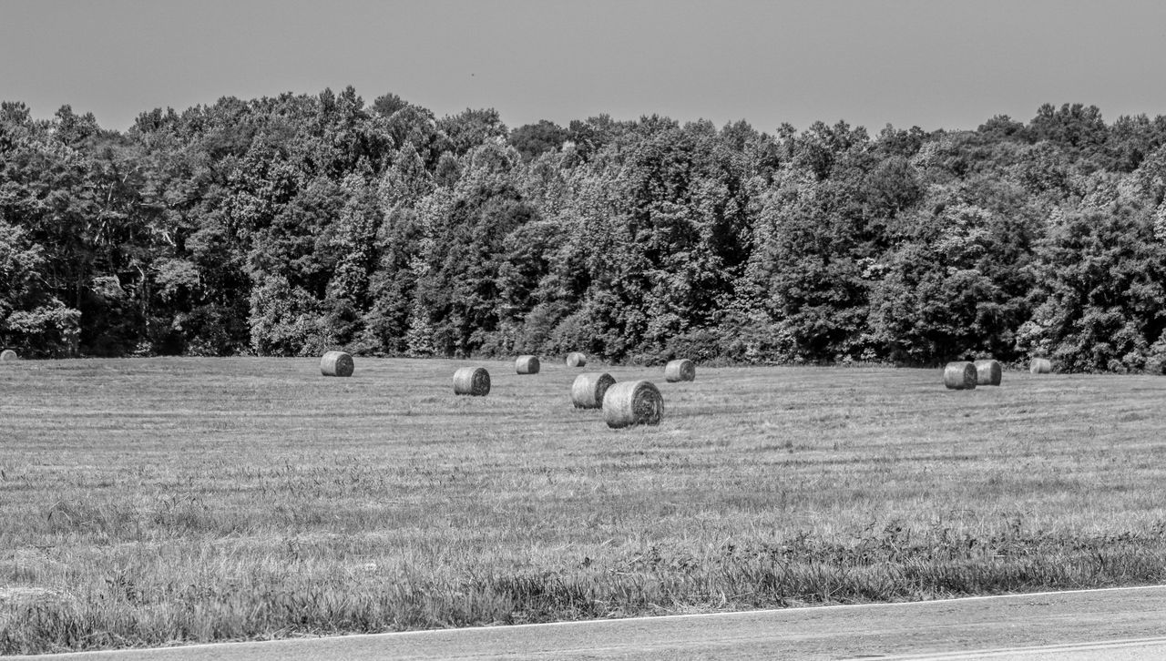 Agriculture Bale  Beauty In Nature Day Eye4photography  EyeEm Gallery EyeEm Nature Lover Field Fine Art Photography Grass Hay Hay Bale Landscape Nature No People Outdoors Rural Scene Tranquil Scene Tranquility Tree