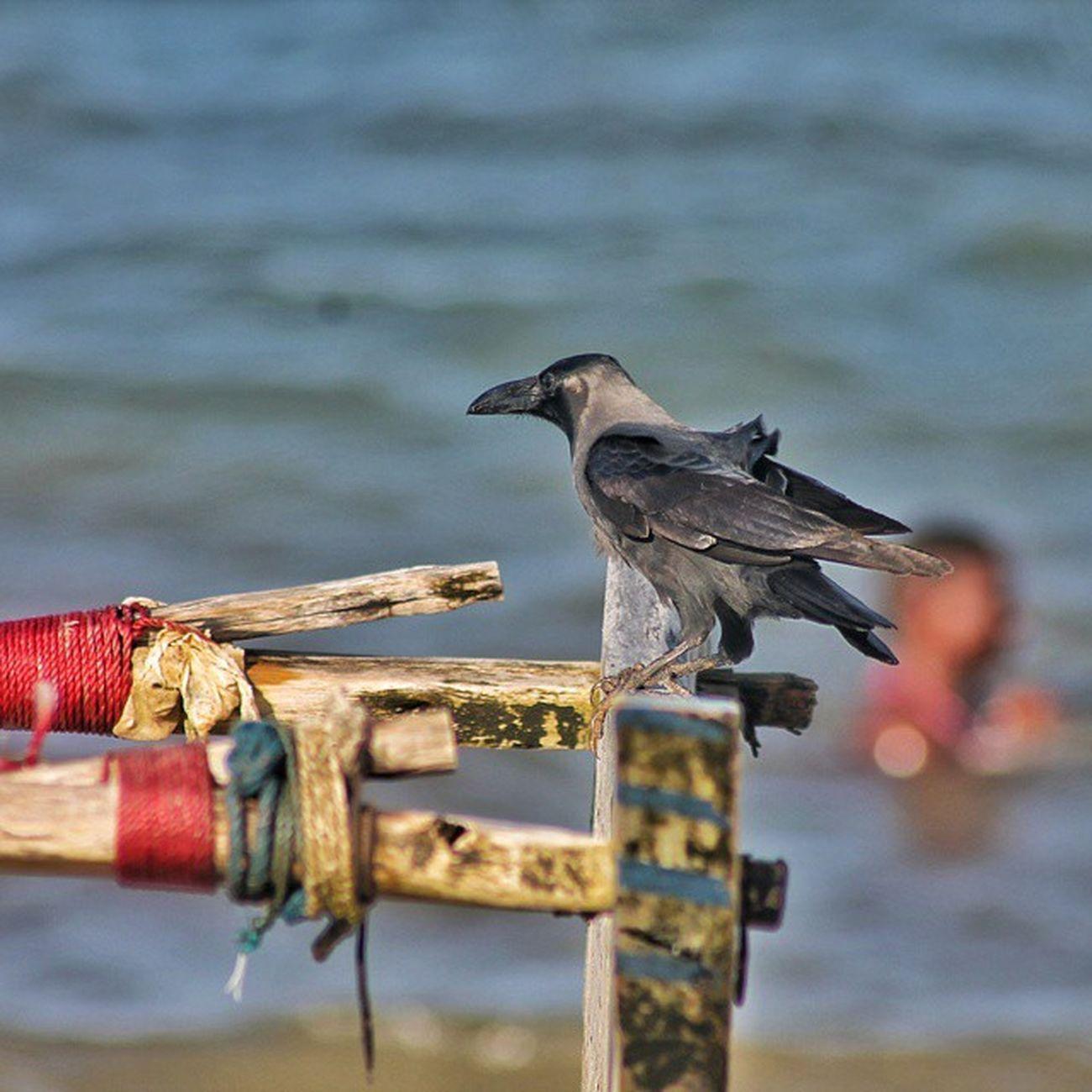 The Crow . . . Bird Tanzania Igersdar Vscotanzania