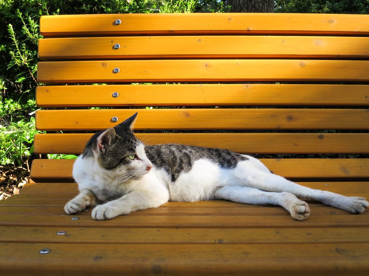Close-Up Of Cat Lying On Bench