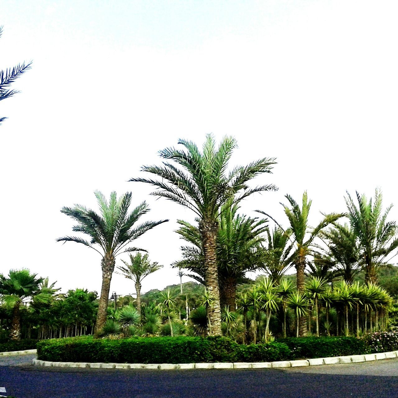 palm tree, tree, growth, nature, clear sky, outdoors, no people, sky, day, beauty in nature, water, scenics, grass