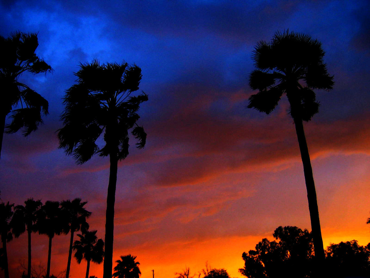 palm tree, tree, silhouette, tree trunk, sunset, sky, beauty in nature, nature, low angle view, scenics, growth, tranquility, cloud - sky, outdoors, tranquil scene, dusk, no people, night
