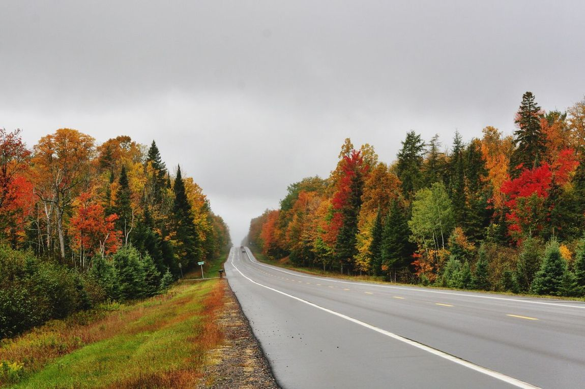 Highway Eye Candy Upper Peninsula Michigan Autumn Colors Road Tree Fall Colors Red Leaves, Autume, Season Change Landscapes With WhiteWall Nature's Diversities Colour Of Life