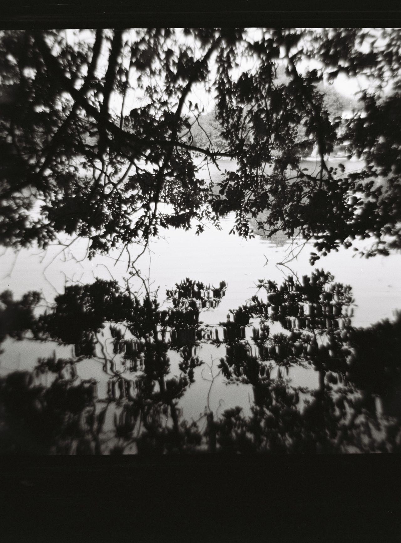 Littoral At The Lake Summer Medium Format Diana F+ Lomography Analogue