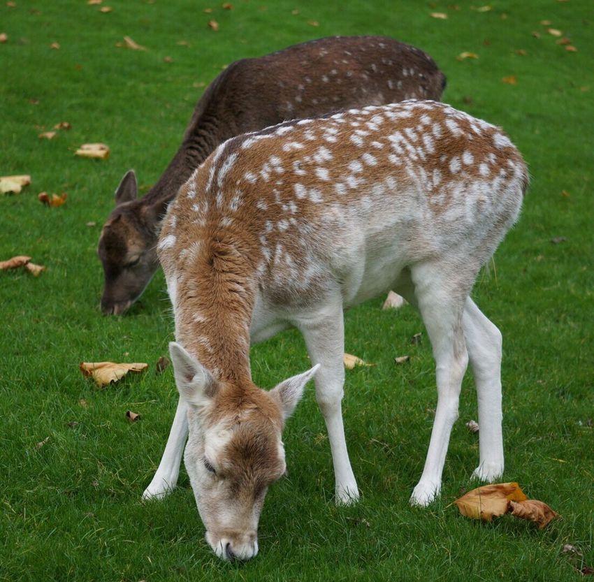 Animals Deer Cute Animal