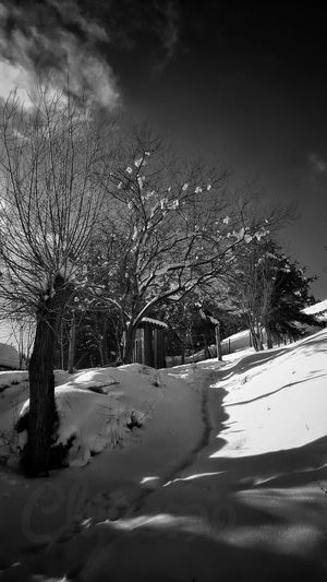 White Color Blue Sky And Clouds Cold Temperature Snow Covered Cloud - Sky Snowing Winter Snow Landscape Romania Snow Covered Trees Snowy Mountains Vintage Photography Black And White Photography Snowcapped Mountain Frozen Tree Trunk Tree Sky Day Outdoors Scenics Beauty In Nature Winter Day Trees And Sky