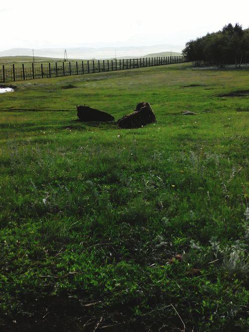 Nature Animals Bizon in Karkaralinsk