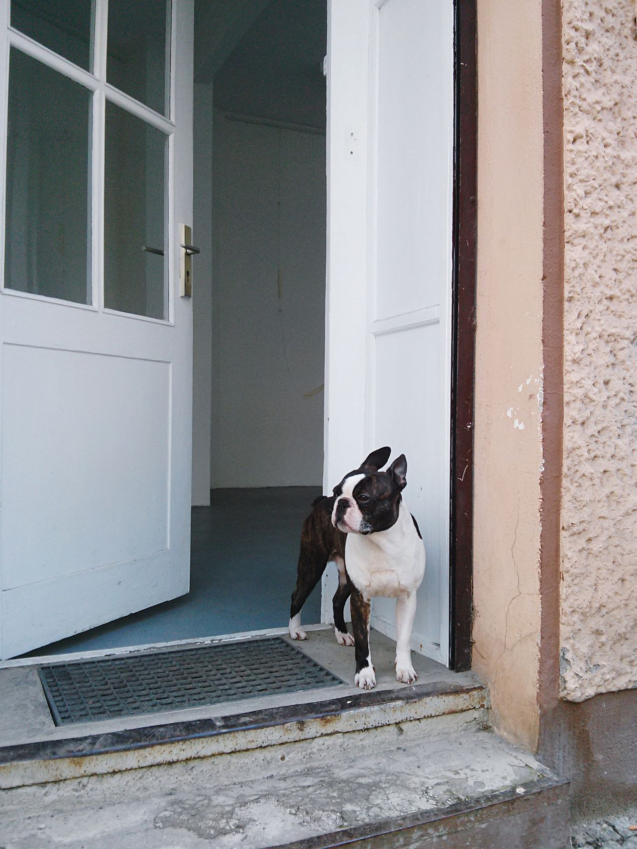 Beautiful stock photos of french bulldog, Animal Themes, Architecture, Berlin, Building Exterior