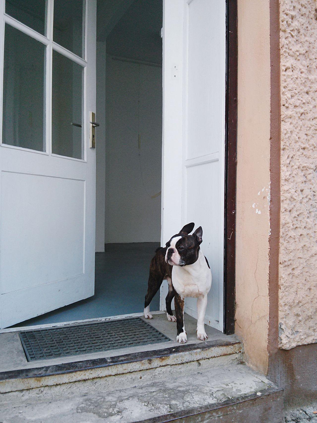 Streetphotography Dog Open Edit