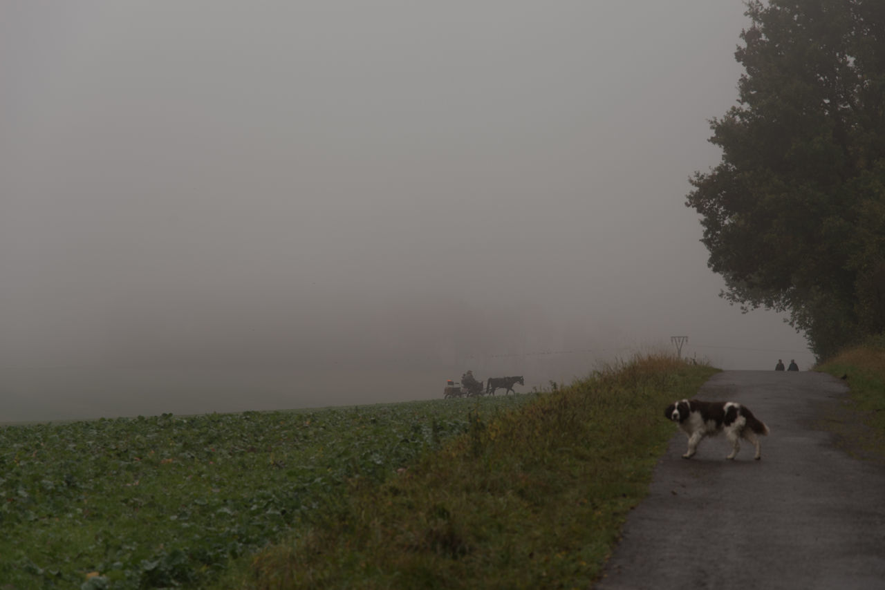 Foggy Day In Late October Autumn Carriage Coach Dog Mammal English Springer Spaniel Fog Foggy Grey Sky Horizon Over Water Outdoors Pet Remote Unrecognizable People Working Animal