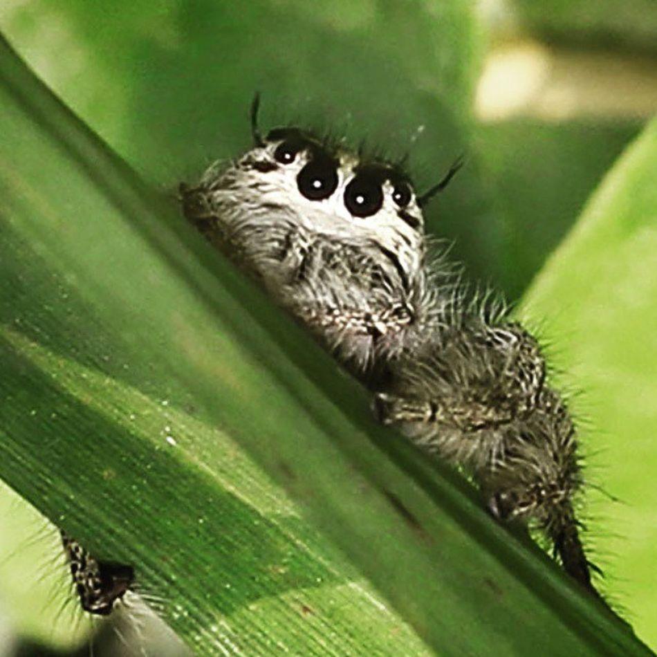 Hello...good morning. Spying. Mengintip. Spiderworld Ig_spider Spider Tgif_macro macroworld macroworld_tr alalamiya_macro