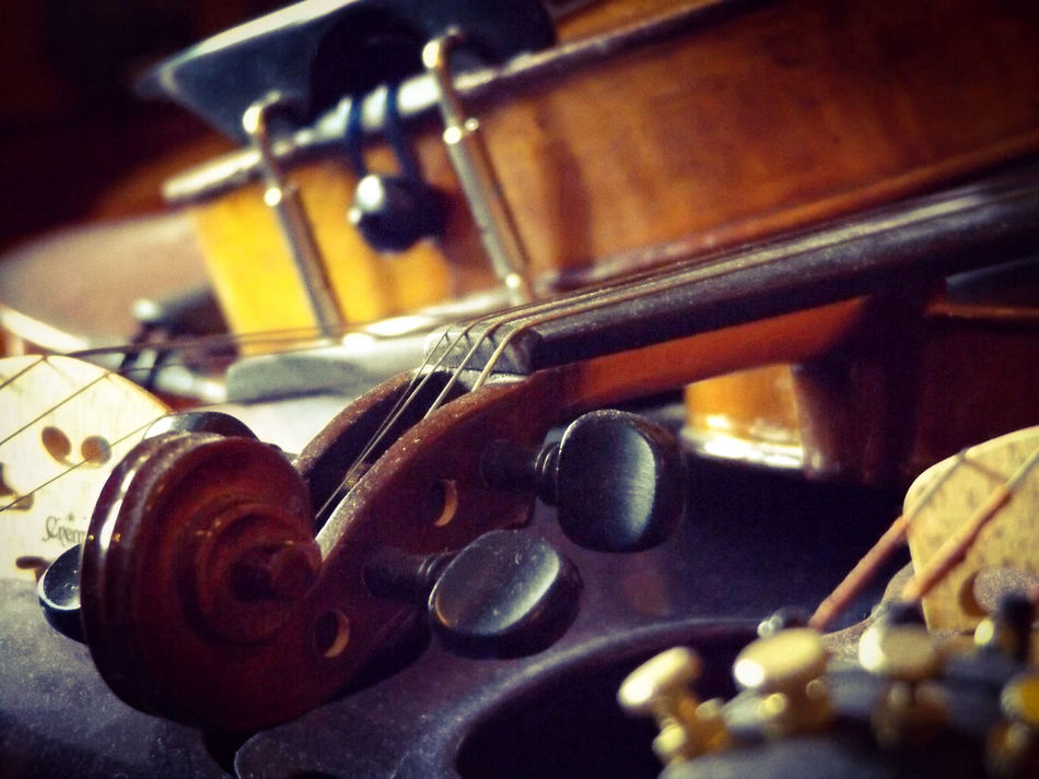 Musical Instruments Curves Wood Curves And Lines Focus On Foreground Violin Instrument Music Brown Violin Strings Intricate Photography Depth Of Field Depth Of Focus Intimate Scroll Tuning Pegs