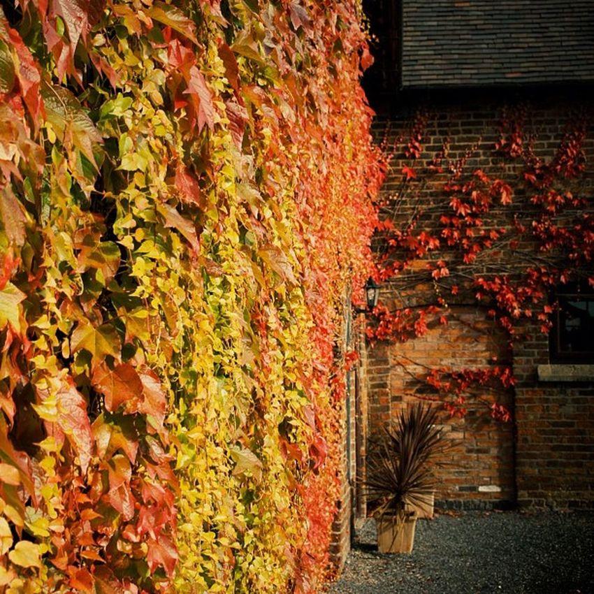 Autumus! #autumn #leaves #redness #colour #barn Barn Colour Redness Leaves Autumn