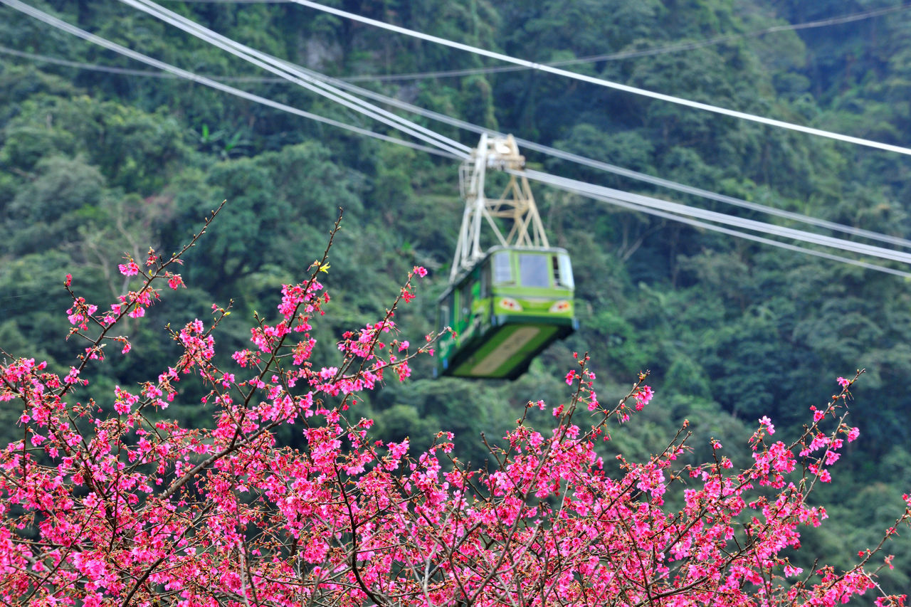 Beauty In Nature Cable Car Cherry Blossoms Comfortable Day Flower Go Sightseeing Hanging High Altitude Holiday Landscape Nature No People Outdoors Pink Plant Taiwan Tourism Transport Travel Vacation