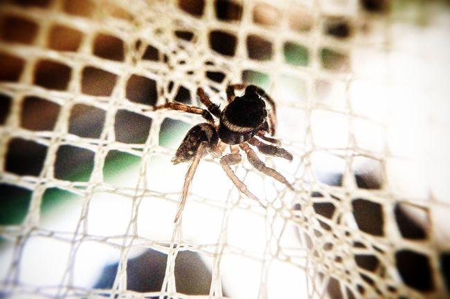 都市蟲林 Taking Photos Spider