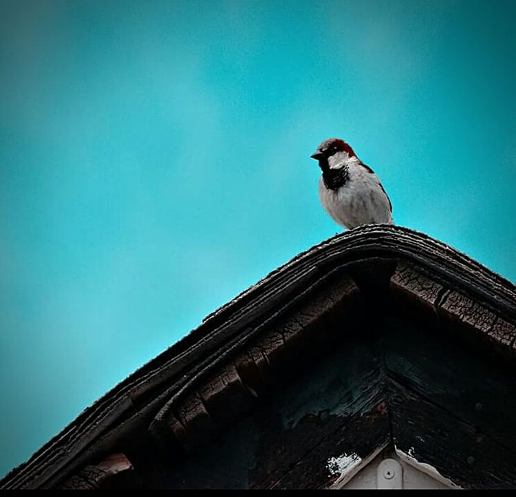 Birds Check This Out Birdwatching Nature Thingsaroundyou Audubon Checkthisout