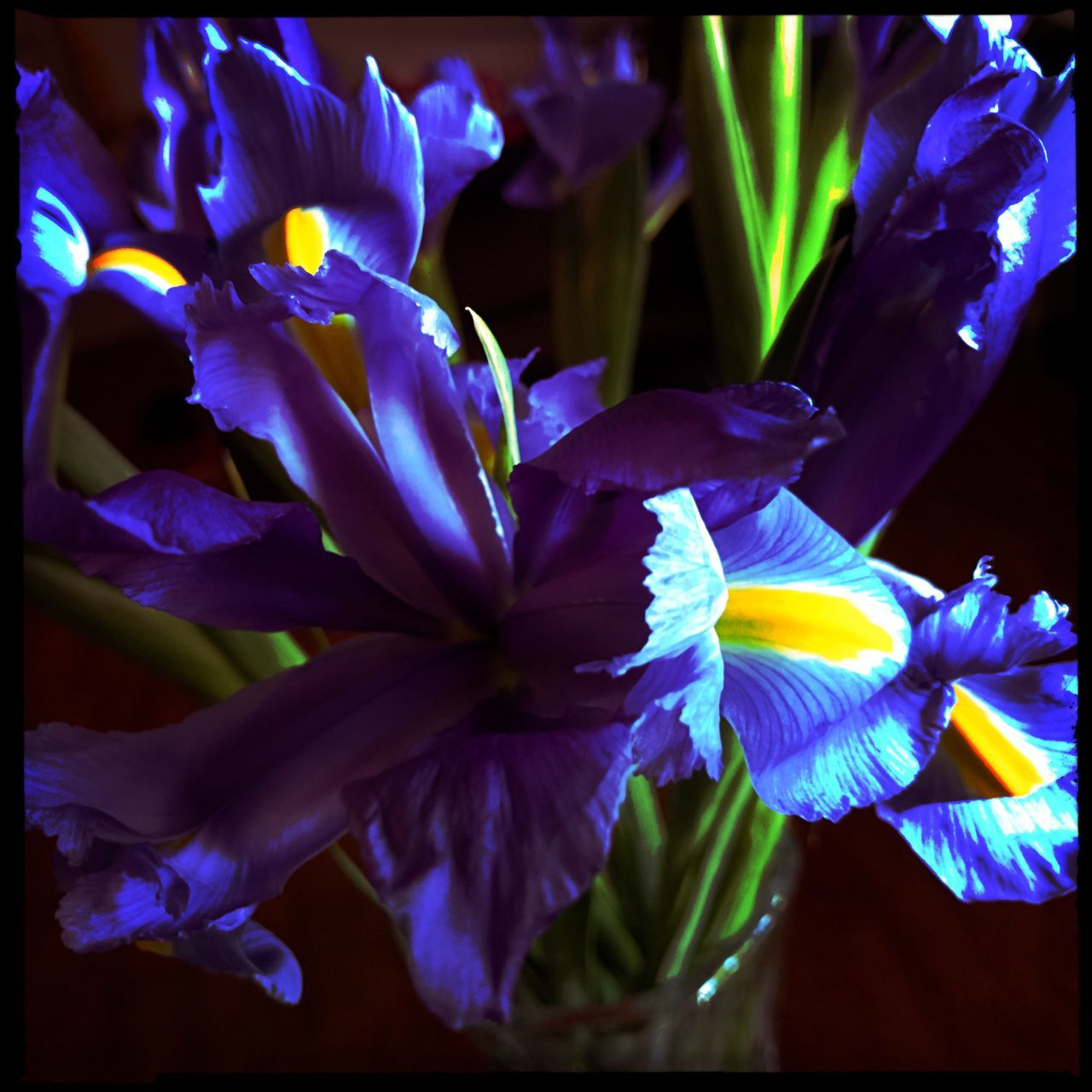 Flower Petal Fragility Freshness Beauty In Nature Flower Head Nature Close-up Blooming Purple Growth Plant No People Iris - Plant Day Outdoors Iris