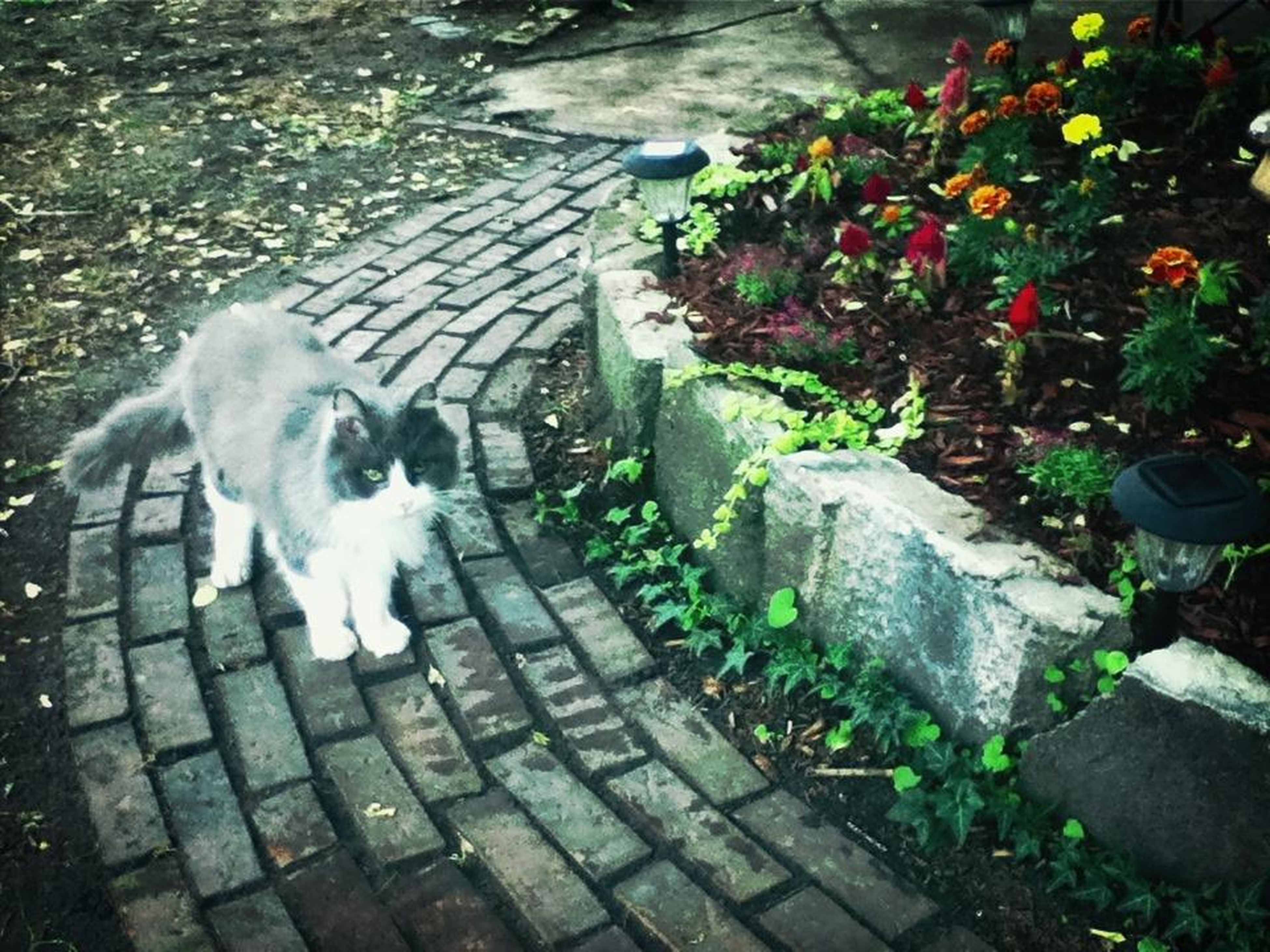 pets, domestic animals, domestic cat, mammal, high angle view, plant, cat, animal themes, one animal, leaf, footpath, steps, paving stone, outdoors, feline, dog, sidewalk, cobblestone, sunlight, day