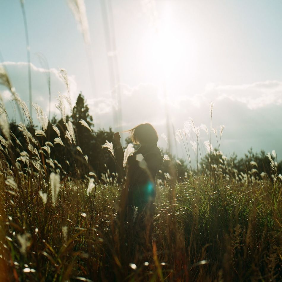 Beautiful stock photos of sunshine, Beauty In Nature, Day, Field, Grass