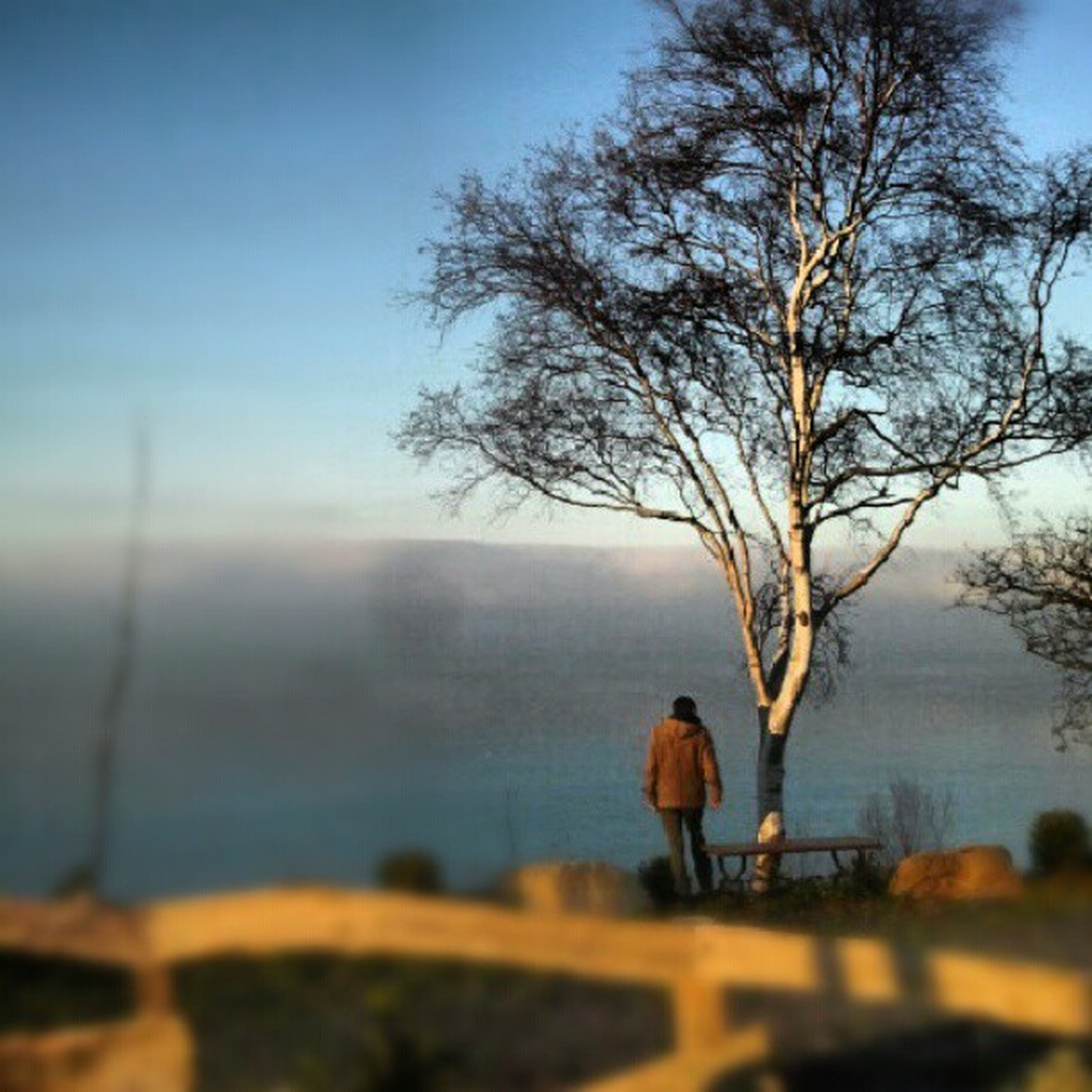 tree, focus on foreground, tranquility, tranquil scene, sky, selective focus, bare tree, landscape, nature, scenics, branch, beauty in nature, clear sky, outdoors, dusk, no people, day, non-urban scene, close-up, lake