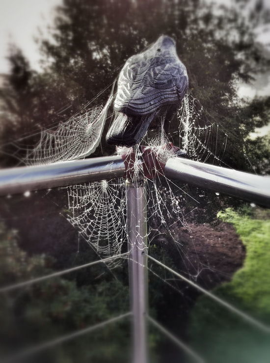 Animal Themes Bird Close-up Day Decoration Garden No People One Animal Outdoors Raven Spider Spider Web